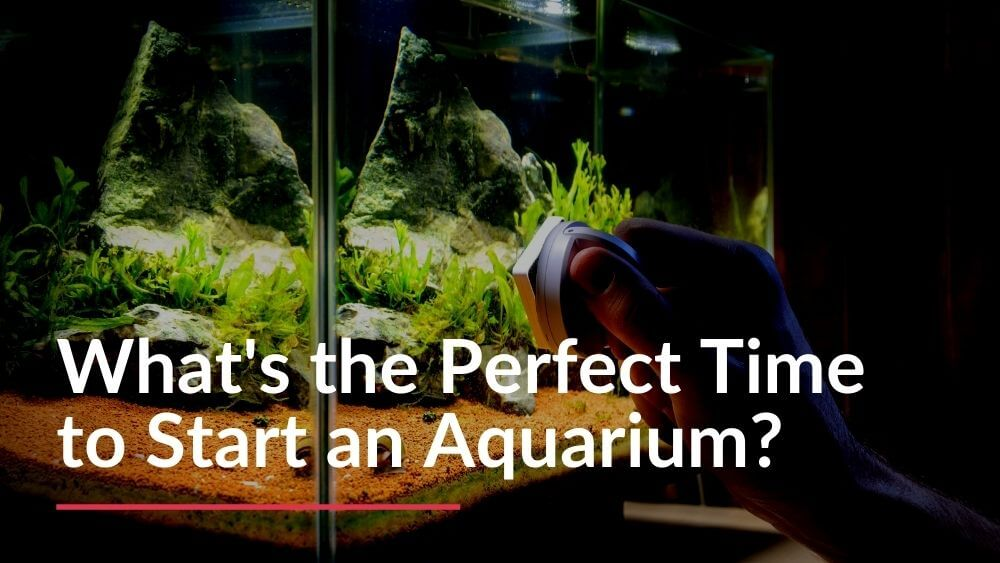 The perfect time to start an aquarium