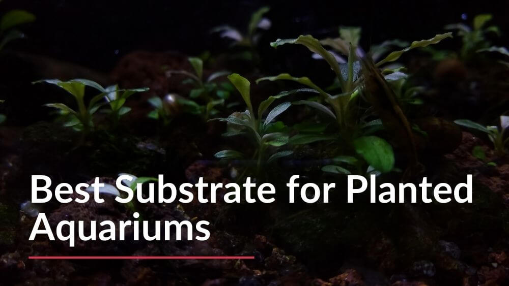 Best substrate for planted aquariums