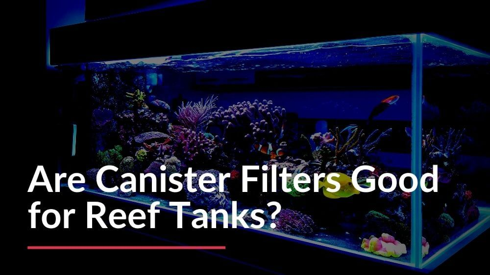 Canister Filters for Reef Tanks Are They Good or Not